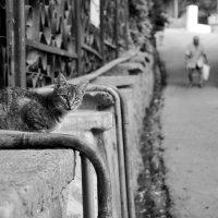 Коты Гурзуфа :: Ольга Мальцева