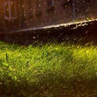 Грибной дождь... :: Алексей Роплев