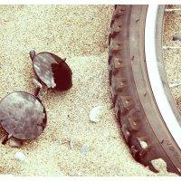 велосипеды :: Дарья Кузнецова