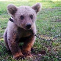 медвежонок :: Юлия Лобанова