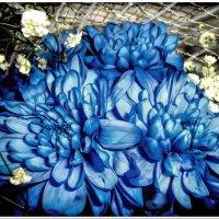Цветы :: Евгений Кочуров