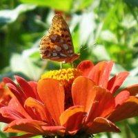 Бабочка :: Екатерина Василькова