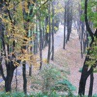 Осень в парке :: Ирина Романова