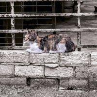 на стене!-из серии Кошки очарование мое! :: Shmual Hava Retro