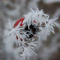 Ледяные шипы :: Ann