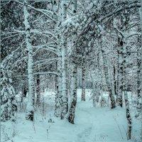 Зима... :: Наталья Rosenwasser