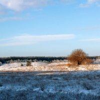 Заснеженное поле :: Юрий Стародубцев