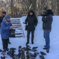 А нужно ли кормить диких птиц? :: Валерий Молоток
