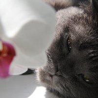 Серафима в орхидеях :: Галина