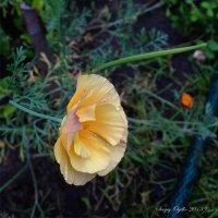 цветок :: Sergey Ogilko