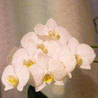 flower :: Oksana Kalyuzhenko
