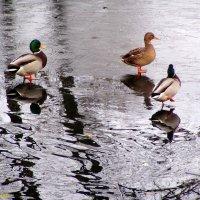 Вода и лед :: vadim