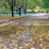 Осень телефоном :: Сергей Волков