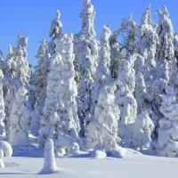 Просто лес :: Анатолий
