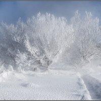 Мороз и солнце день чудесный :: Анатолий 71