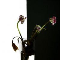 ...цветы... :: Александр    Swan Лебедев
