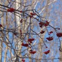 Зима :: Ирина Богатырёва