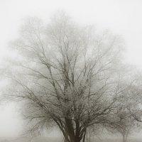 туман :: сергей