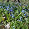 Весенние цветы леса :: Мария Климова