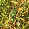 А во кустах,да во зелёных... :: Николай Волков
