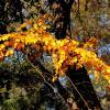 Осенний мотив :: Нина Бутко