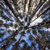Лесное небо :: Алексей Баринов