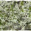 Знаете, что может быть прекрасней, чем цветенье вишни под окном? :: Валентина ツ ღ✿ღ