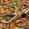 Осенний этюд... :: Евгений Яхим