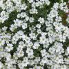 Цветы при храме :: Наиля