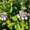 Сочи - страна цветов :) :: Наталья Владимировна