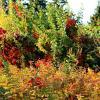 краски осени :: tina kulikowa