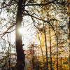 Золотая осень :: Паша