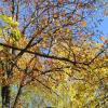 Деревья осенью :: Дмитрий Никитин