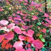 Яркий лиственный покров :: Виктория Попова