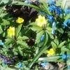 Лесное разноцветье. :: Зоя Чария