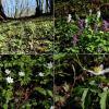 Цветы у дороги в лесу :: Heinz Thorns