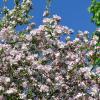 Буйное цветение. :: zoja