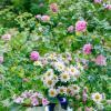 Натюрморт на фоне роз :: Ольга Бекетова