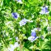 цветы :: Наталья Шестакова