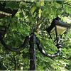 Зеленоградский фонарь. :: Валерия Комова