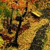 Балконотерапия  Осень для  истории :: олег свирский