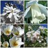 Весна в белых цветах :: Nina Yudicheva