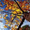 Листочки  солнце  золотит... :: Евгений