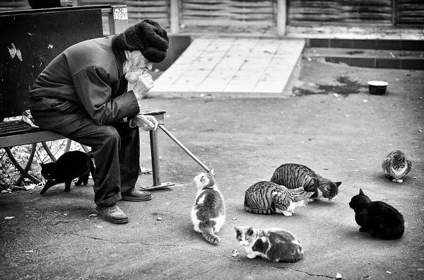 Нью-Йоркский Институт Фотографии (New York Institute of Photography): ИЗБРАННЫЕ УЧЕБНЫЕ ЭТЮДЫ СТУДЕНТОВ КУРСА NYIP (октябрь 2014, выпуск 6)