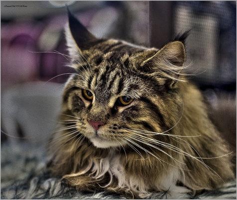 Выставка Мур-Мяу вИзраиле-из серии Кошки очарование мое!
