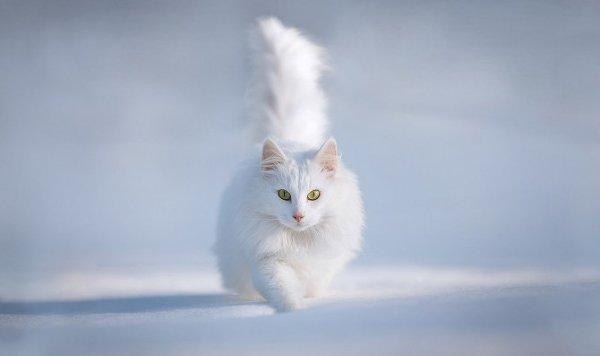 Особенности зимней фотографии, или как снимать на белом снегу