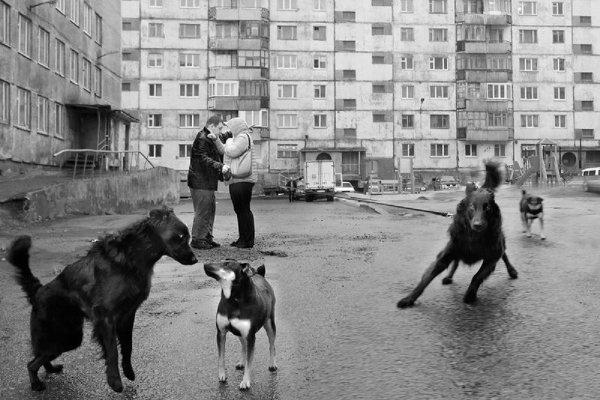 "Студенческое фото недели: ""Встреча"", Маргарита Шрайнер http://disted.ru/"