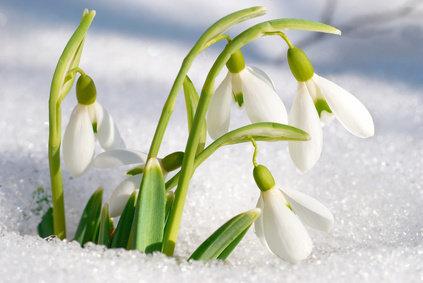 Итоги конкурса «Моя весна»