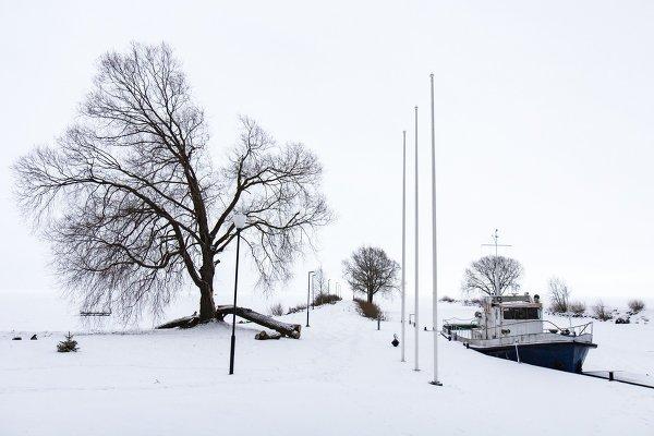 """Студенческое фото недели: """"Зимний пейзаж"""", Татьяна Леина http://disted.ru/"""