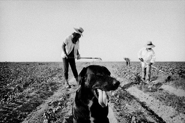 Америка в фотографиях Мэтта Блэка
